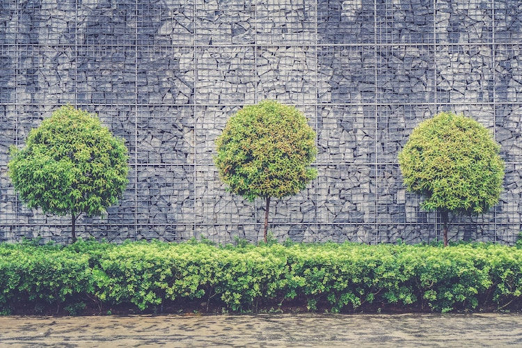 A trio of trees in front of a wall