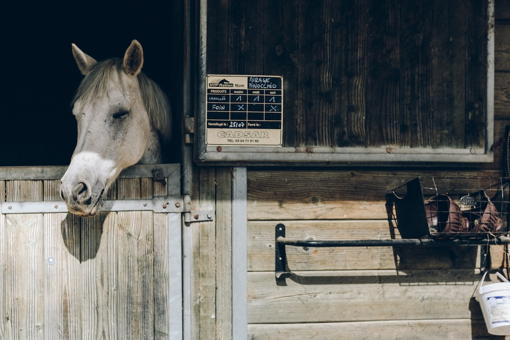 grey horse hanging head over stable door