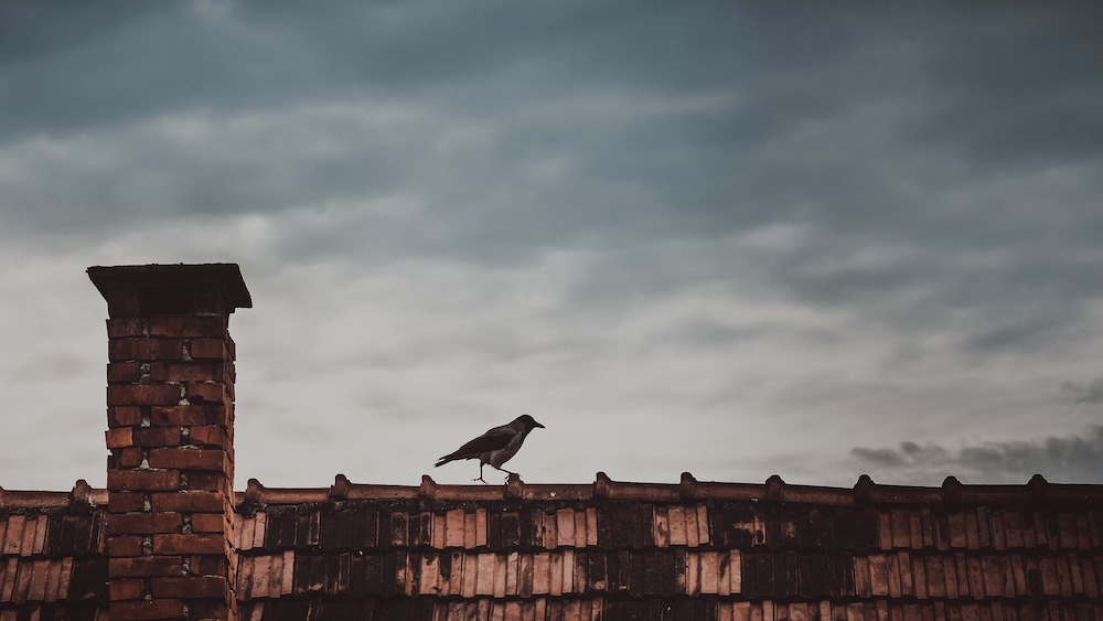 Roof with a bird on top and moody sky.