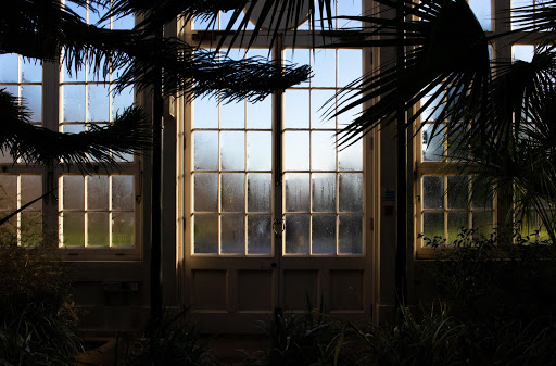 Glass panelled doors framed by plants