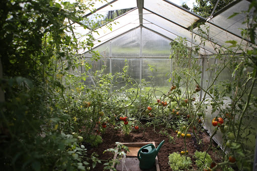 The interior of a greenhouse.