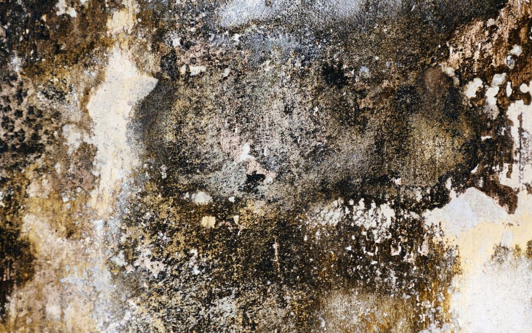 The Impact of Damp on a Home